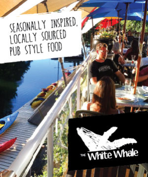 WhiteWhale_300x360